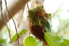 Het nest van de mier royalty-vrije stock afbeeldingen