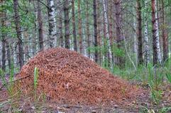 Het nest van de mier Royalty-vrije Stock Foto's