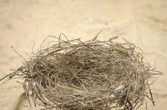 Het nest van de mooie vogel op het zand Royalty-vrije Stock Foto's