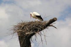 Het nest van de ooievaar Stock Fotografie