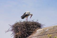 Het nest van de ooievaar op een dak stock afbeelding