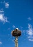 Het nest van de ooievaar op pyloon. Royalty-vrije Stock Afbeeldingen
