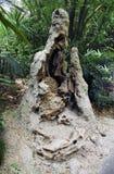 Het nest van de termiet stock afbeeldingen