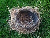 Het nest van de vogel Royalty-vrije Stock Afbeeldingen