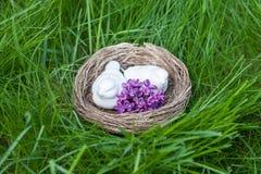 Het nest van de vogel greeen grasachtergrond Royalty-vrije Stock Afbeelding