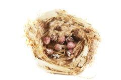 Het nest van de vogel met eieren op wit Stock Afbeeldingen