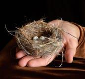 Het Nest van de vogel met in Hand Eieren Stock Foto