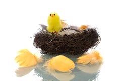 Het Nest van de vogel met veren Royalty-vrije Stock Afbeelding