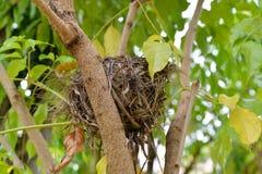 Het Nest van de vogel op boom stock foto's