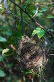 Het nest van de vogel op een tak Stock Afbeeldingen