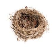 Het Nest van de vogel over een witte achtergrond Stock Foto's