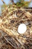 Het nest van de vogel `s Stock Foto