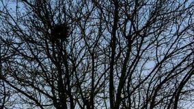 Het nest van de vogel `s Royalty-vrije Stock Fotografie
