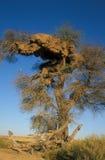 Het Nest van de Vogel van de wever Royalty-vrije Stock Foto's