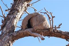 Het Nest van de Vogel van Hornero Royalty-vrije Stock Foto