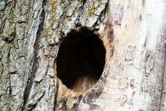 Het nest van de vogel in wilg, stock fotografie