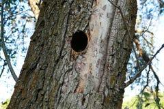 Het nest van de vogel in wilg, stock afbeeldingen
