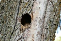 Het nest van de vogel in wilg, gesneden vogelnest in wilg, royalty-vrije stock afbeeldingen