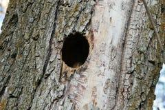 Het nest van de vogel in wilg, gesneden vogelnest in wilg, stock afbeeldingen
