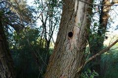 Het nest van de vogel in wilg, gesneden vogelnest in wilg, royalty-vrije stock foto