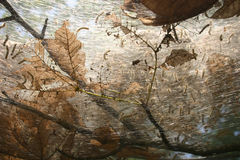 Het nest van de worm Royalty-vrije Stock Afbeelding