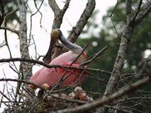Het nest van een moeder Stock Foto