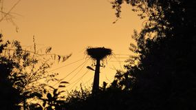 Het nest van een ooievaar bij zonsondergang Royalty-vrije Stock Afbeelding