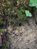 het nest van grondinsecten Stock Fotografie