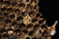 Het Nest van het insect Royalty-vrije Stock Fotografie