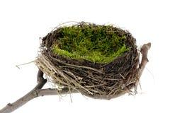 Het nest van Pasen Stock Foto's