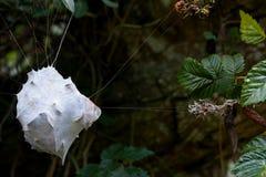 Het nest van spinnen Royalty-vrije Stock Foto