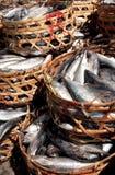 Het nest van vissen Stock Fotografie