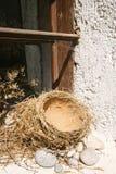 Het nest van vogels royalty-vrije stock afbeelding