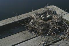 Het nest van vogels Royalty-vrije Stock Afbeeldingen