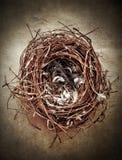 Het Nest van vogels Stock Afbeeldingen