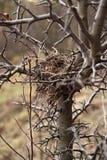 Het nest van vogels Royalty-vrije Stock Foto
