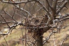 Het nest van vogels Royalty-vrije Stock Fotografie