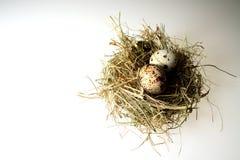 Het nest van vogels Stock Fotografie