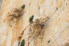 Het Nest van vogels in de Westelijke Muur Stock Fotografie