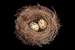 Het nest van vogels met eieren Stock Foto's