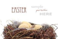 Het nest van vogels met eieren Royalty-vrije Stock Foto's