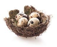 Het nest van vogels met eieren Stock Afbeeldingen
