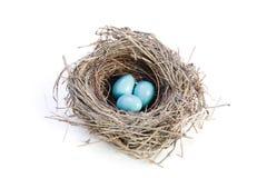 Het Nest van vogels op Wit Stock Afbeeldingen
