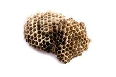Het nest van wespen Royalty-vrije Stock Foto's