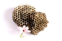 Het nest van wespen met een bloem Stock Afbeeldingen