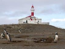 Het nestelen kolonie van Magellanic-Pinguïn, Spheniscus-magellanicus, Isla Magdalena, Patagonië, Chili stock foto's
