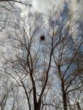 Het nestzon van de vogel stock foto