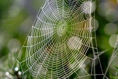 Het netwerkval van het Web Royalty-vrije Stock Afbeeldingen
