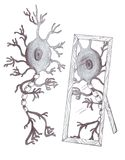 Het neuron van de spiegel Royalty-vrije Stock Afbeeldingen