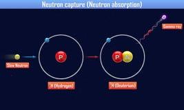Het neutron vangt Neutronenabsorptie Stock Foto's